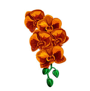 hawaiian flower graphic from hawaii hula company