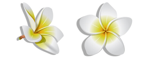 graphic of plumeria flowers