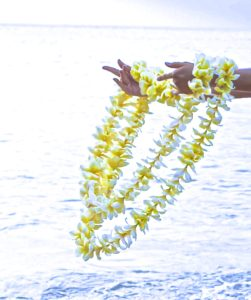 white and yellow flower leis